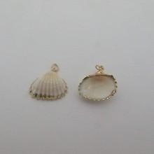 10 pcs Shells about 19-23mm
